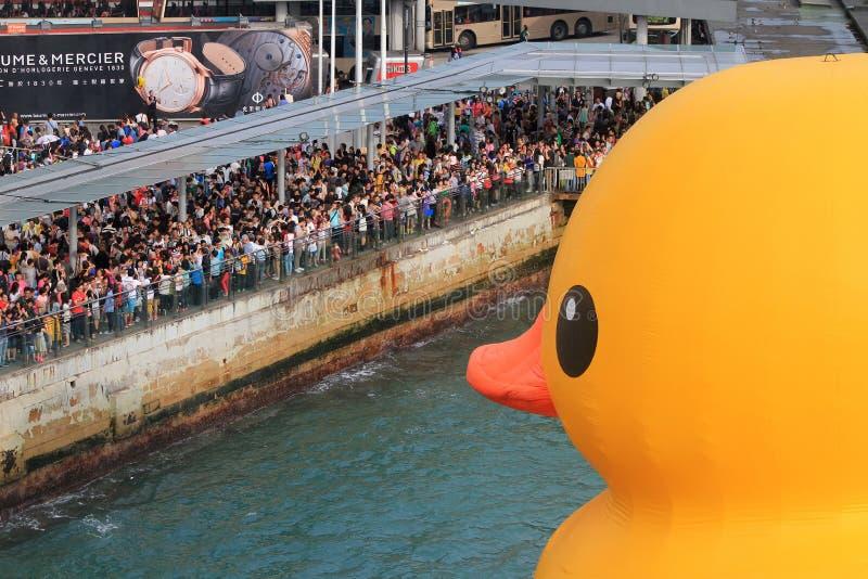 Water, vertebrate, bird, duck, leisure, fun, endurance, sports, ducks, geese, and, swans, recreation, race, waterfowl, crowd, tour. Photo of vehicle, bird, boat stock image