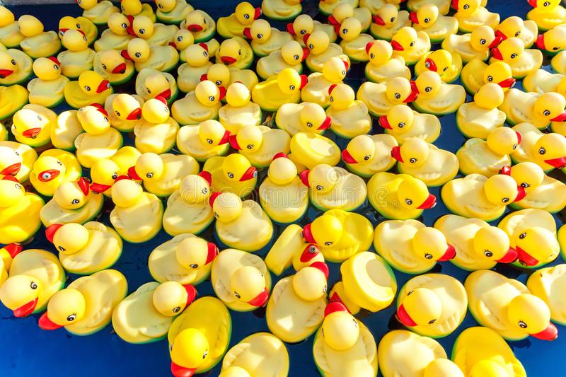 Rubber duck in pool stock photography