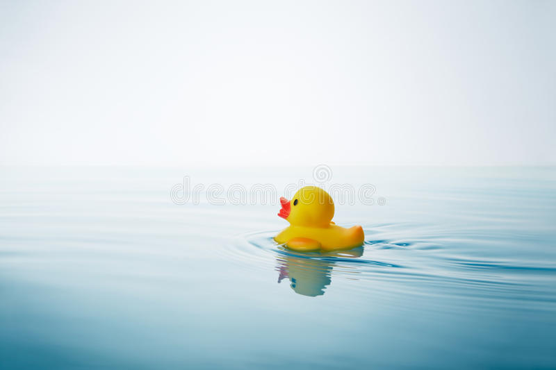Rubber duck. Yellow rubber duck swimming on water with waves and ripples stock photography