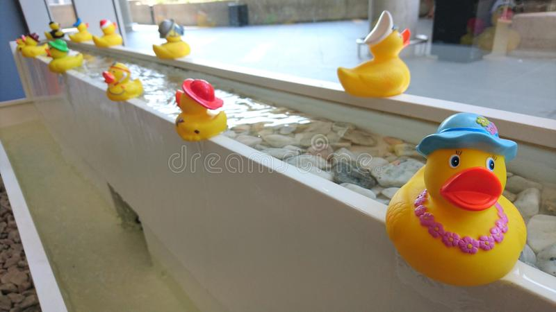 rubber ducks on a fountain royalty free stock image
