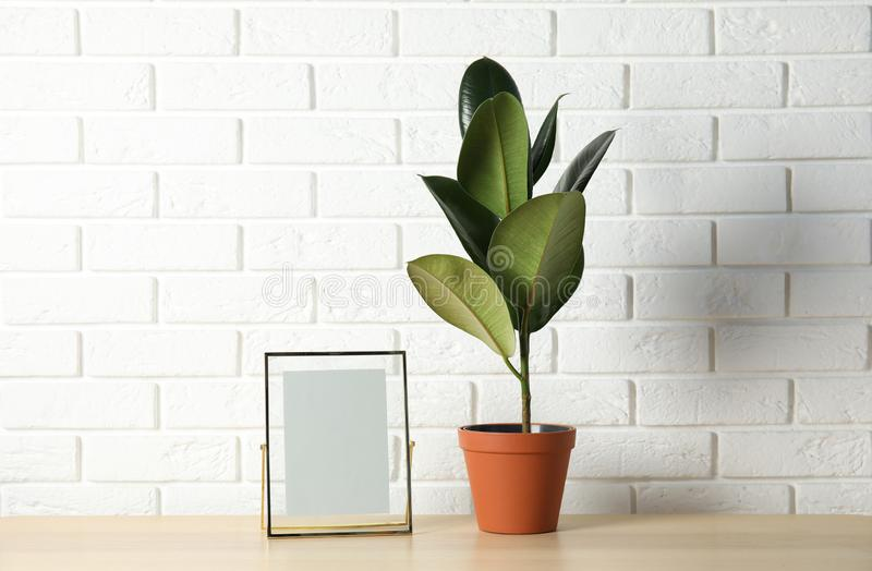 Rubber plant and photo frame on table near brick wall, space for design. Home decor royalty free stock photos
