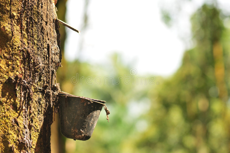 At a rubber plantation series stock photo