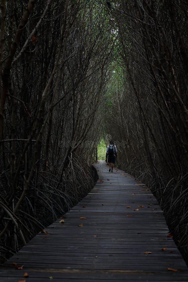 rubberaanplanting in zuidelijk, Thailand stock fotografie