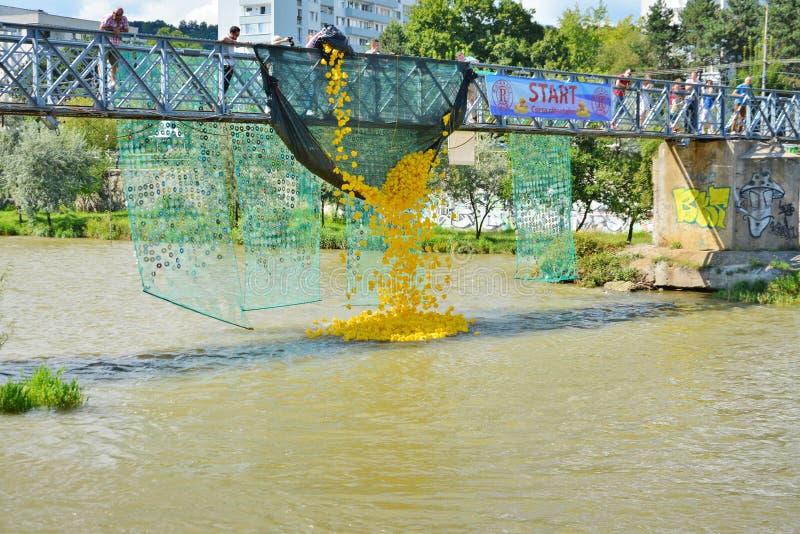 Rubbereendras onderaan de rivier voor liefdadigheid royalty-vrije stock foto