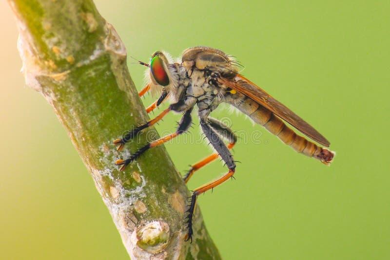 Rubberfly 库存照片