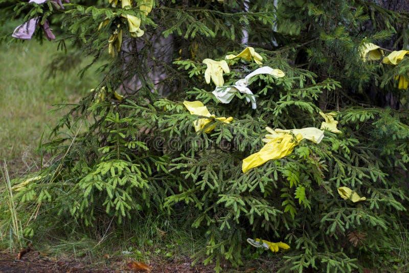 Rubberhandschoenen worden op spruce gedroogd na desinfectie van een kamer in een landelijk gebied in Rusland royalty-vrije stock afbeeldingen