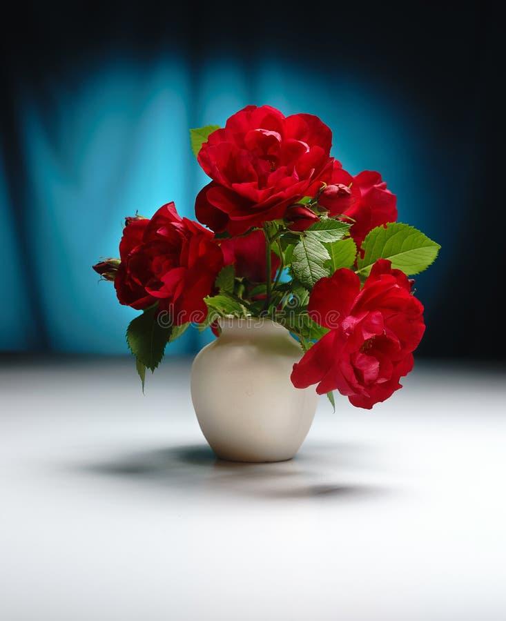 Ruber de Rosa, c'est une rose rouge dans une cruche blanche de plâtre, sur une table blanche, contre une couleur de turquoise photo stock