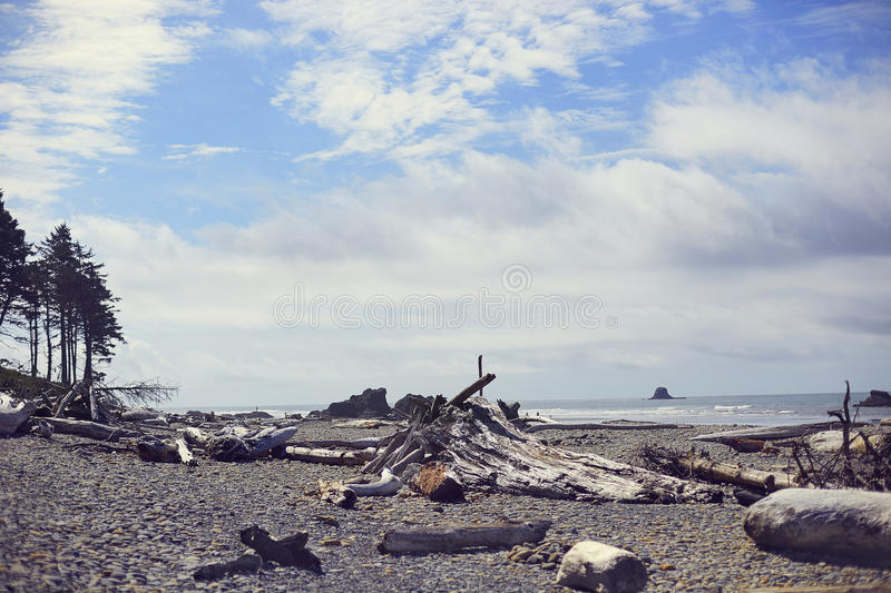 Ruby Beach Driftwood, Washington photos stock