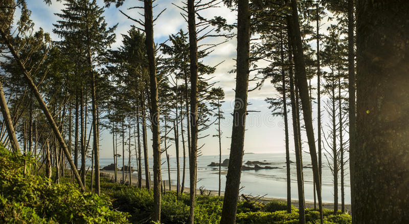 Ruby Beach Forest imagens de stock royalty free