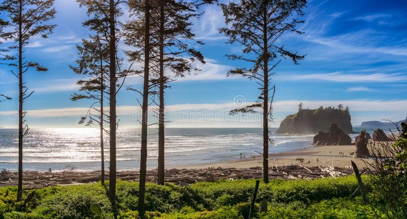 Ruby Beach landscape, Washington state, USA. Ruby Beach landscape with some silhouetted conifers in the foreground on a sunny day, Olympic National Park royalty free stock images