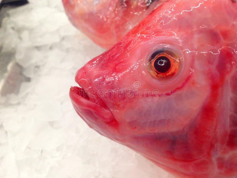 Ruby Fish in de markt royalty-vrije stock foto's