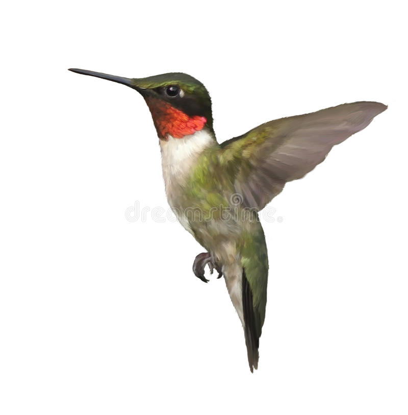 Ruby Throated Hummingbird Watercolor royalty-vrije stock afbeelding