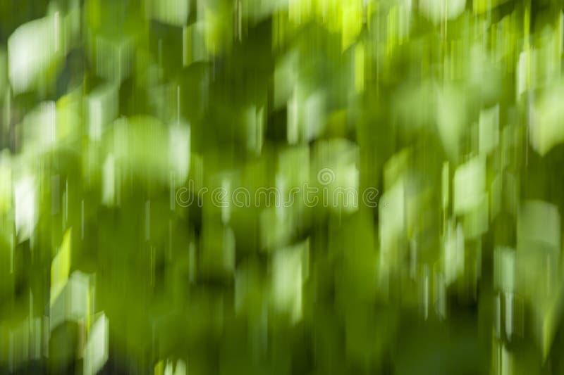 Ruch plamy tło, zielony bokeh tło - zamazani liście obraz stock