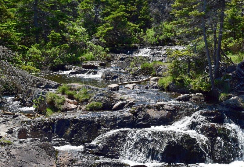 Ruch rzeki kaskady siklawa Torbay NL obraz royalty free