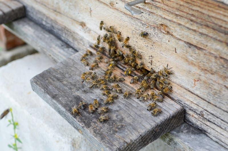 Ruche avec des abeilles photos libres de droits
