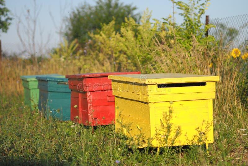Ruche Color E D 39 Abeille Photo Stock Image Du Tournesol