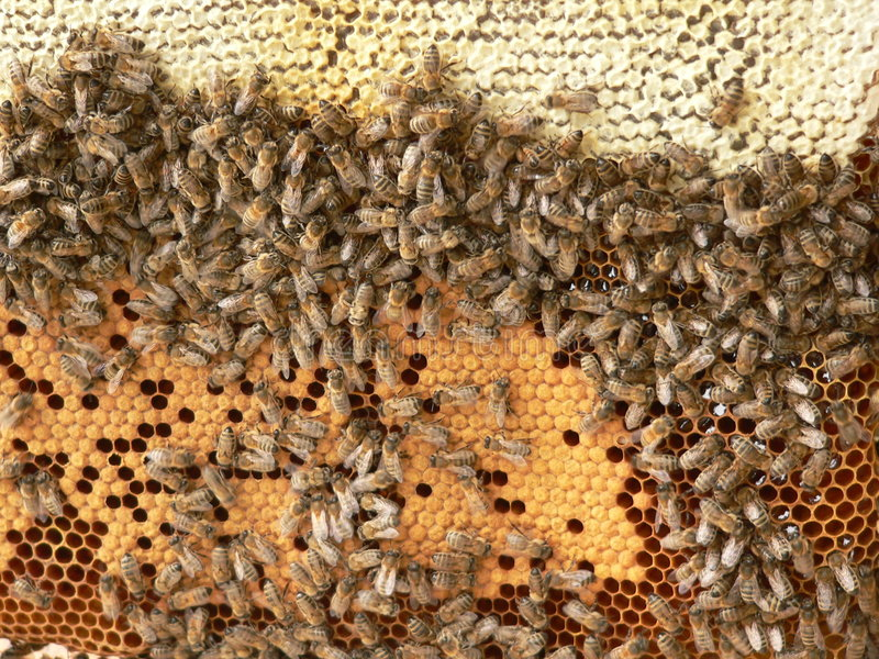Ruche d'abeille image libre de droits