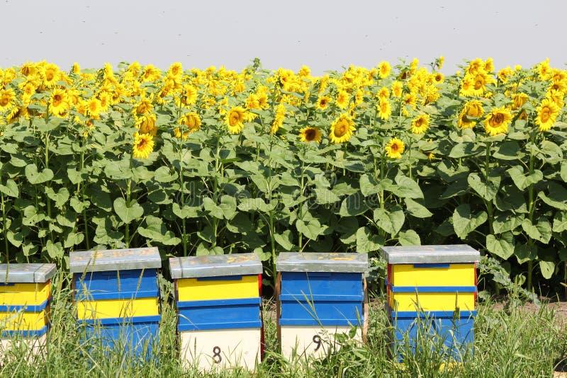Ruche d'abeille photos stock