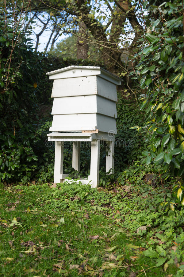 Ruche d'abeille image stock