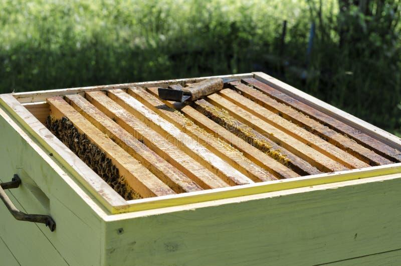 Ruche d'abeille avec des abeilles photo libre de droits