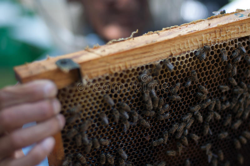Ruche d'abeille de miel image stock