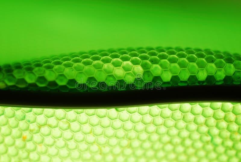 Ruche d'abeille en vert photographie stock