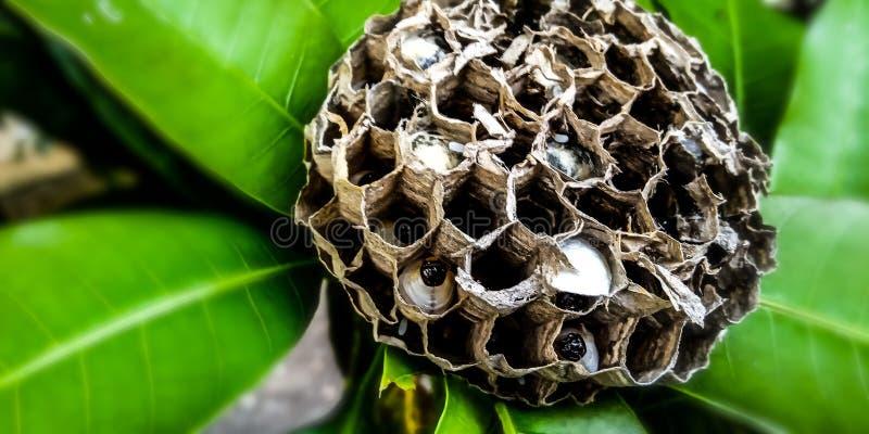 Ruche d'abeille images libres de droits