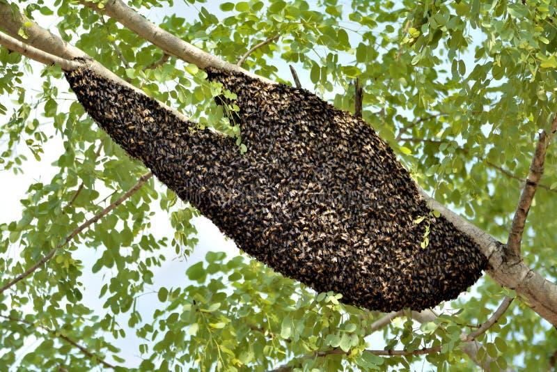 Ruche d'abeille sur un arbre dans une forêt photo stock