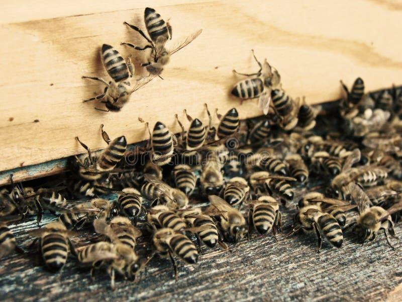 Ruche d'abeilles photo libre de droits