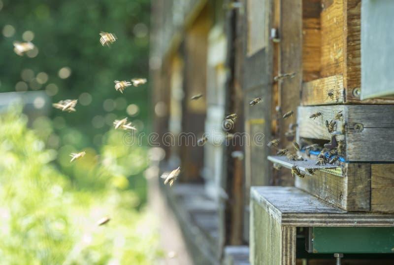 Ruche et abeilles photo stock