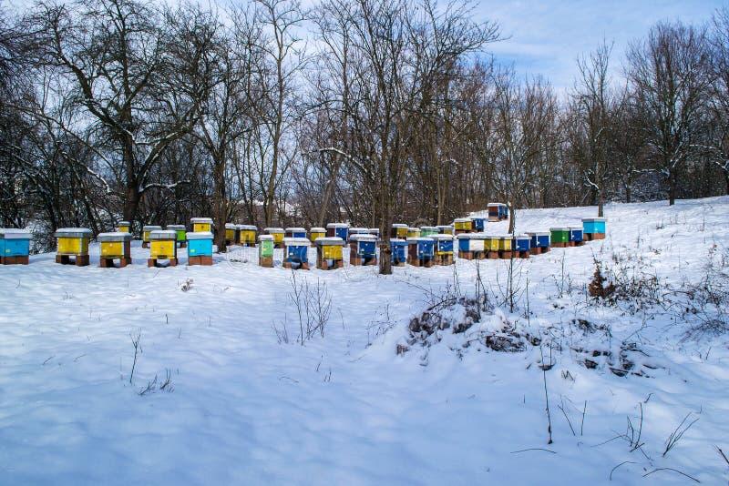 Rucher en hiver photographie stock libre de droits