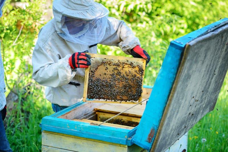 rucher L'apiculteur travaille avec des abeilles près des ruches photographie stock