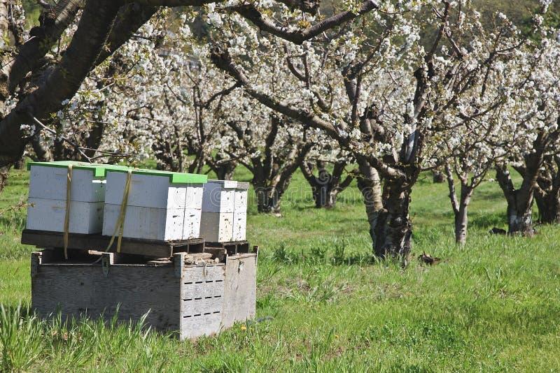 Ruches actives d'abeille images libres de droits
