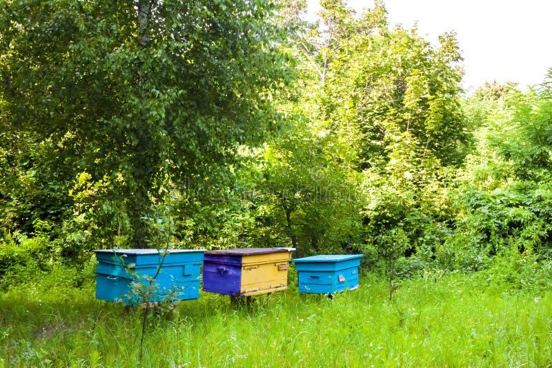 Ruches colorées dans le rucher dans un jardin d'été photographie stock
