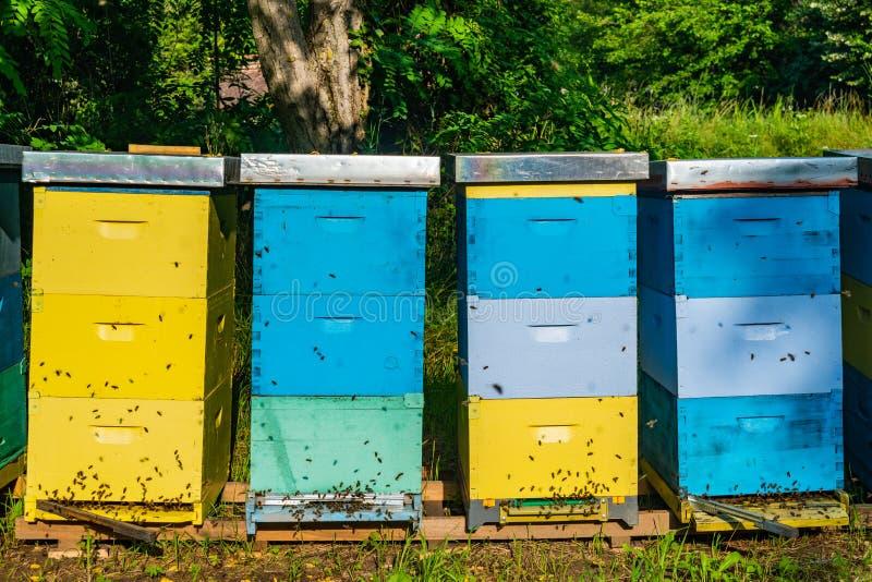 Ruches d'abeille entour?es par des arbres un jour ensoleill? Rang?e des ruches en bois pour des abeilles images libres de droits