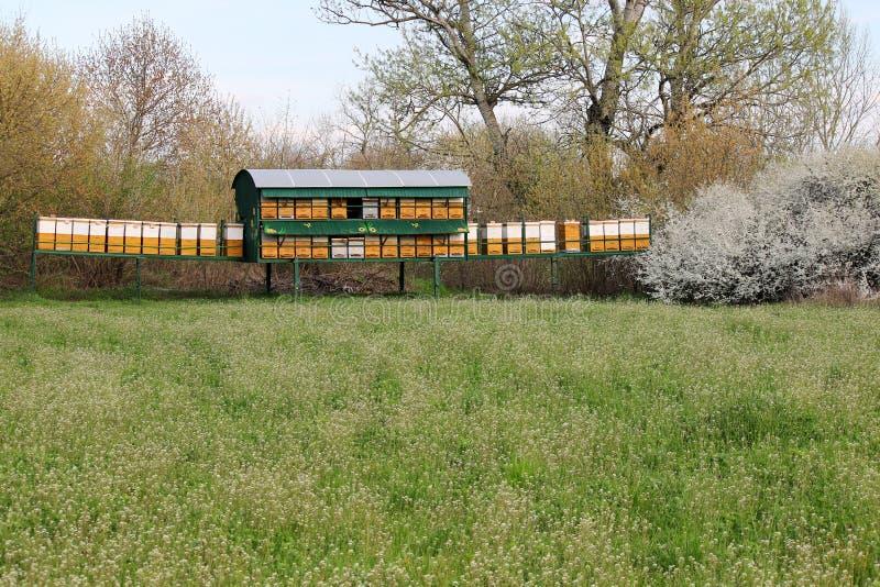 Ruches d'abeille sur le champ vert images stock
