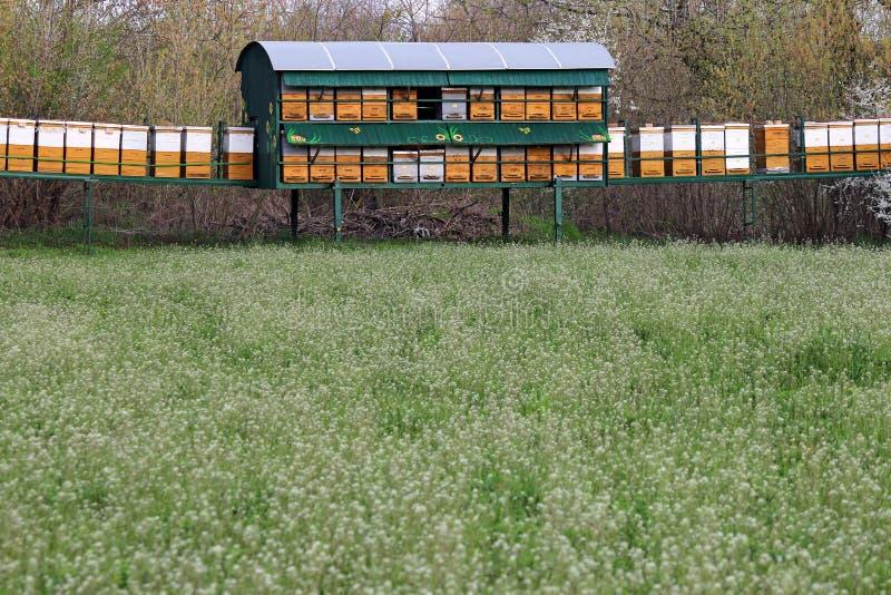 Ruches d'abeille sur le pré images libres de droits