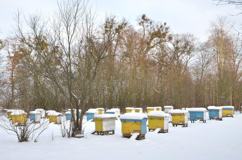 Ruches dans le rucher couvert de neige photo stock
