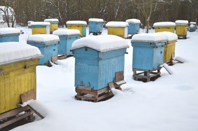 Ruches dans le rucher couvert de neige image libre de droits