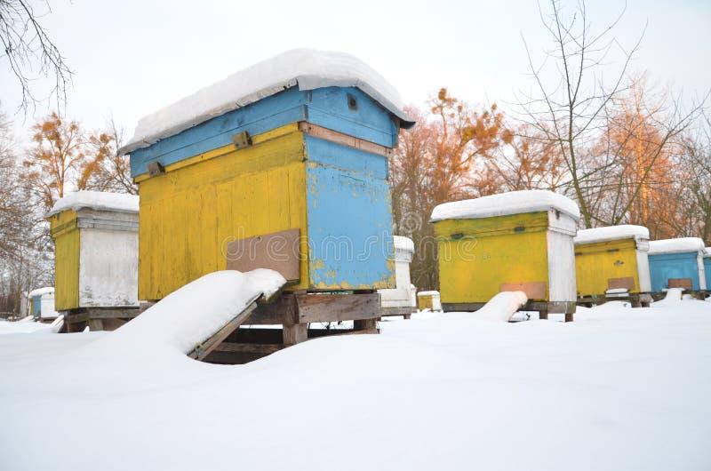 Ruches dans le rucher couvert de neige image stock