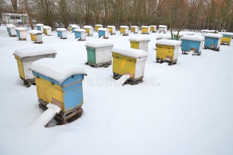 Ruches dans le rucher couvert de neige images stock