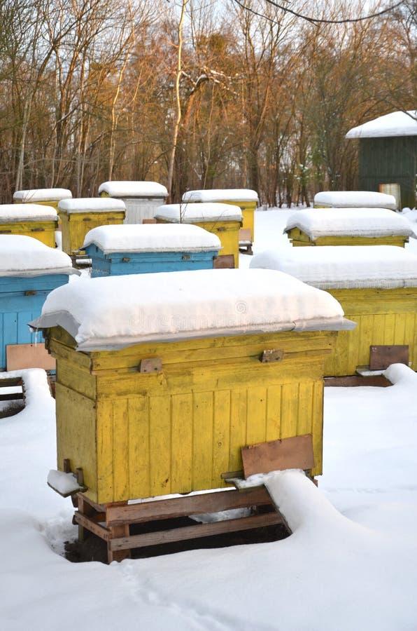 Ruches dans le rucher couvert de neige photographie stock libre de droits