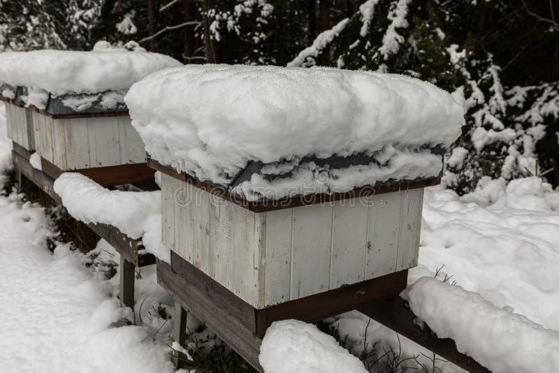 Ruches dans le rucher couvert de neige en hiver photo libre de droits
