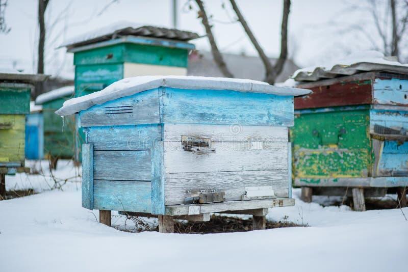 Ruches de groupe dans le jardin d'hiver avec la bâche de neige photo libre de droits