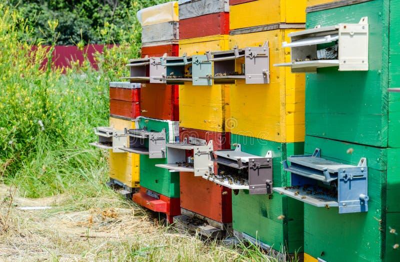 Ruches de ruche dans le rucher Abeilles grandissantes pour obtenir le miel image stock