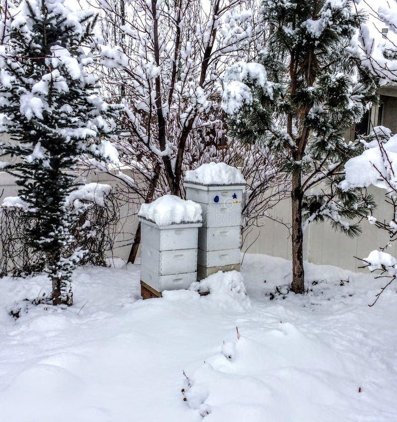 Ruches en hiver couvert dans la neige dans l'arrière cour images stock