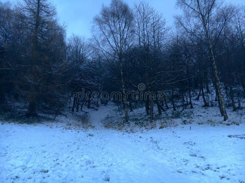 Ruchill-Park im Winter lizenzfreie stockbilder