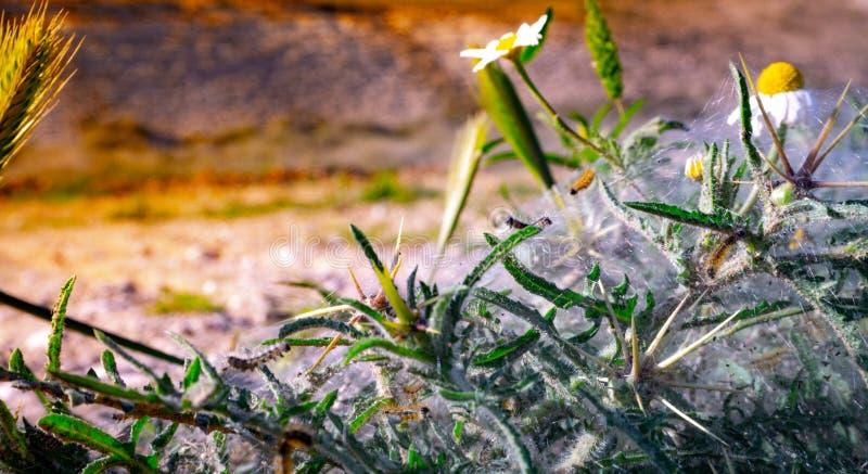 Ruchliwie gąsienica iść pracować zdjęcia royalty free