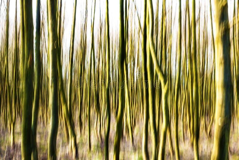 Ruchu zamazany lasowy tło. obraz royalty free