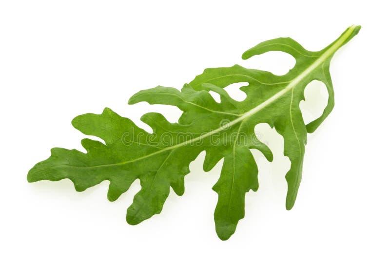 Rucola or arugula leaf isolated on white background royalty free stock images
